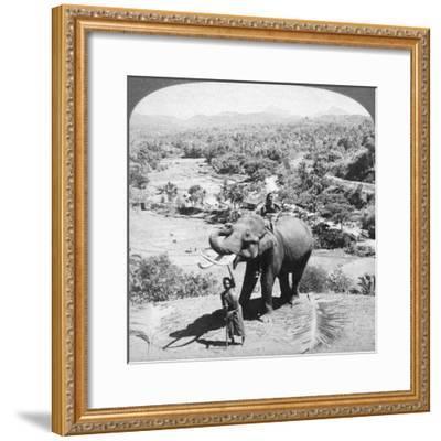 An Elephant and its Keeper, Sri Lanka, 1902-Underwood & Underwood-Framed Giclee Print