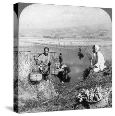 Men Gathering Rushes Near Suzukawa, Fujiyama, Japan, 1904-Underwood & Underwood-Stretched Canvas Print