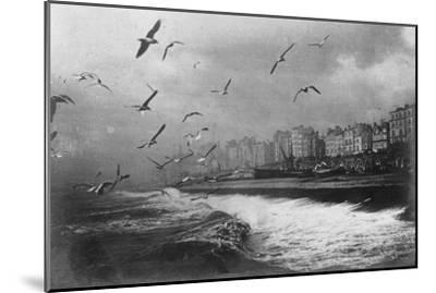 Gulls at Brighton, East Sussex, Early 20th Century--Mounted Giclee Print