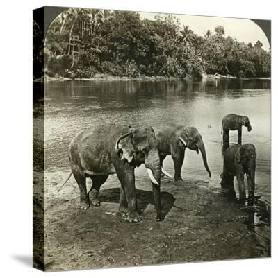 Elephants, Sri Lanka (Ceylo)-Underwood & Underwood-Stretched Canvas Print