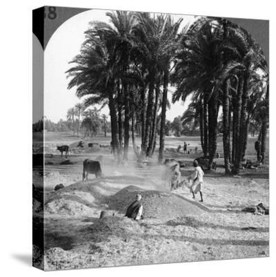 The Winnowing of the Grain after Threshing, Egypt, 1905-Underwood & Underwood-Stretched Canvas Print