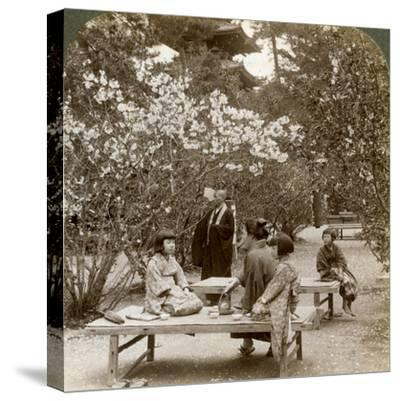 A Family Enjoying a Picnic under the Cherry Blossoms, Omuro Gosho, Kyoto, Japan, 1904-Underwood & Underwood-Stretched Canvas Print