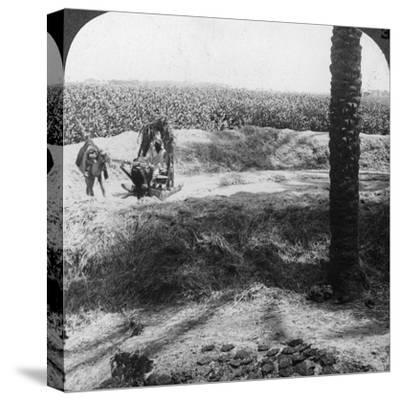 Threshing in Egypt, 1905-Underwood & Underwood-Stretched Canvas Print