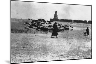 Sheep Grazing Outside Samarra, Mesopotamia, 1918--Mounted Giclee Print