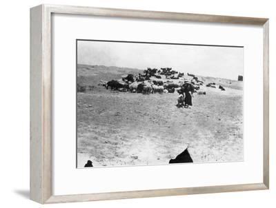 Sheep Grazing Outside Samarra, Mesopotamia, 1918--Framed Giclee Print