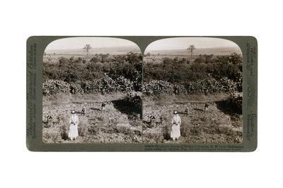 The North-West View from Shunem, across the Plain of Esdraelon, Towards Carmel, 1900s-Underwood & Underwood-Framed Giclee Print