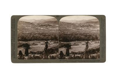 The Hill of Samaria, from the South, Surrounded by its Fig and Olive Groves, Palestine, 1900-Underwood & Underwood-Framed Giclee Print