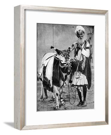 Hindu Cow with Sacred Cow, India, 1936--Framed Giclee Print