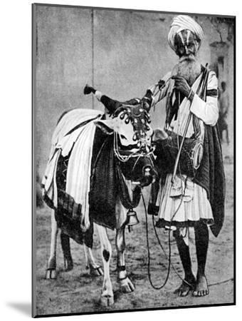Hindu Cow with Sacred Cow, India, 1936--Mounted Giclee Print