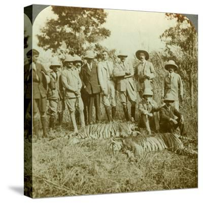 Tiger Hunting, Cooch Behar, West Bengal, India, C1900s-Underwood & Underwood-Stretched Canvas Print