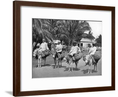 On the Way Home from Market, Jamaica, C1905-Adolphe & Son Duperly-Framed Giclee Print