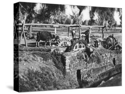 Irrigating Fields Near Cairo, Egypt, C1920S--Stretched Canvas Print