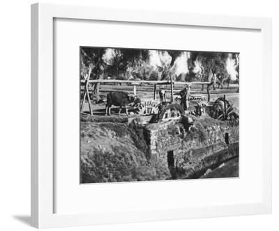 Irrigating Fields Near Cairo, Egypt, C1920S--Framed Giclee Print