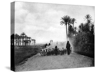 Shepherding Sheep Near Cairo, Egypt, C1920S--Stretched Canvas Print