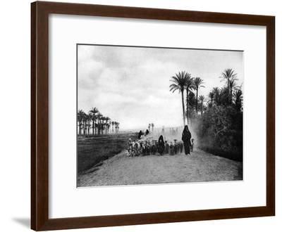 Shepherding Sheep Near Cairo, Egypt, C1920S--Framed Giclee Print