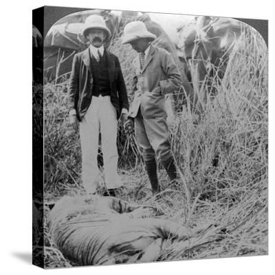 The Dead Maneater, Behar Jungle, India, C1900s-Underwood & Underwood-Stretched Canvas Print