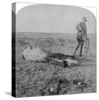 Soldier Leaving His Dead Horse on the March to Bloemfontein, South Africa, Boer War, 1901-Underwood & Underwood-Stretched Canvas Print