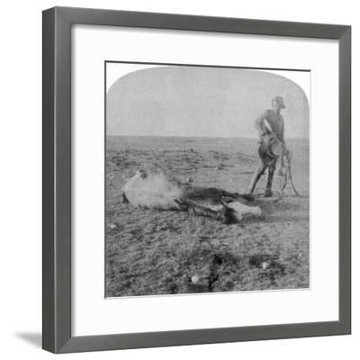 Soldier Leaving His Dead Horse on the March to Bloemfontein, South Africa, Boer War, 1901-Underwood & Underwood-Framed Giclee Print