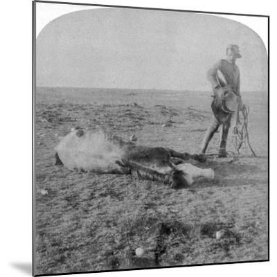 Soldier Leaving His Dead Horse on the March to Bloemfontein, South Africa, Boer War, 1901-Underwood & Underwood-Mounted Giclee Print