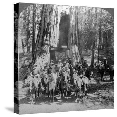 Cavalry Passing Through the Great Tree 'California, California, Usa-Underwood & Underwood-Stretched Canvas Print