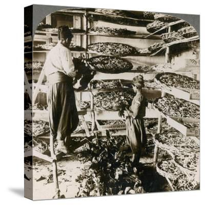 Feeding Silk Worms their Breakfast of Mulberry Leaves, Lebanon Mountains, Syria, 1900s-Underwood & Underwood-Stretched Canvas Print