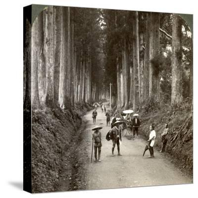 The Groves Were God's First Temples, Avenue of Noble Cryptomerias at Nikko, Japan, 1904-Underwood & Underwood-Stretched Canvas Print
