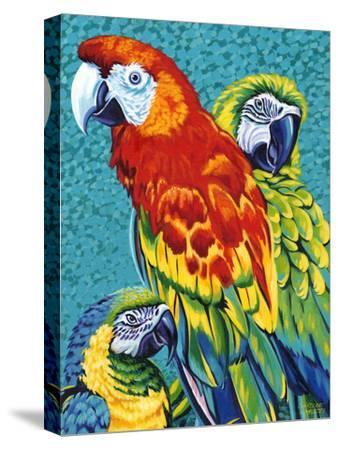 Birds in Paradise III-Carolee Vitaletti-Stretched Canvas Print