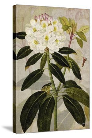 Rhododendron I-John Butler-Stretched Canvas Print