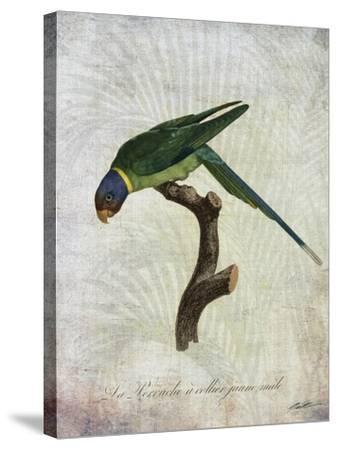 Parrot Jungle IV-John Butler-Stretched Canvas Print