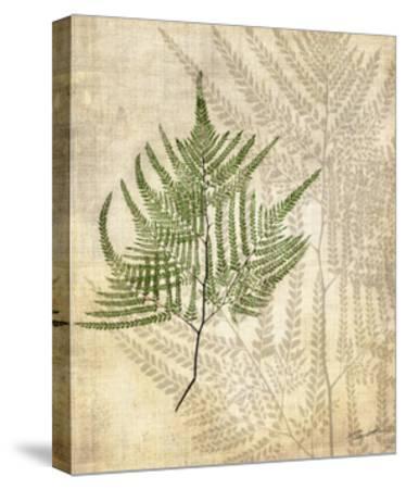 British Ferns V-John Butler-Stretched Canvas Print