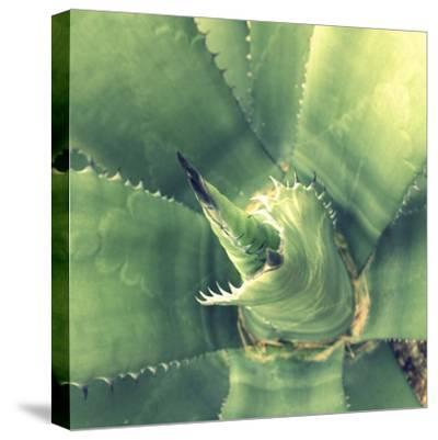 Succulent II-Lillian Bell-Stretched Canvas Print