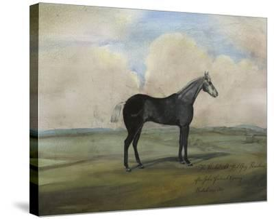 """The Kicker,"" a Steel Grey Racehorse-Naomi McCavitt-Stretched Canvas Print"
