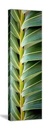 Palma I-Susan Bryant-Stretched Canvas Print