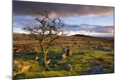 Looking to Pew Tor from Feather Tor, Dartmoor, Devon, England. Autumn (September)-Adam Burton-Mounted Photographic Print