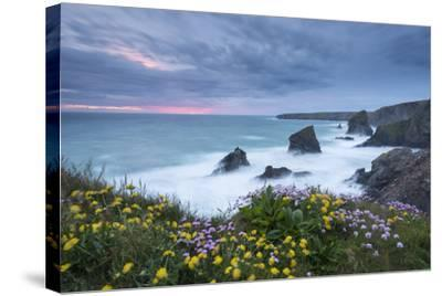 Wildflowers Growing on the Clifftops Above Bedruthan Steps on a Stormy Evening, Cornwall, England-Adam Burton-Stretched Canvas Print