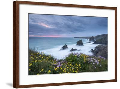 Wildflowers Growing on the Clifftops Above Bedruthan Steps on a Stormy Evening, Cornwall, England-Adam Burton-Framed Photographic Print