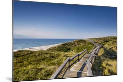 Wodden Path in the Dunes, Wenningstedt, Sylt Island, Northern Frisia, Schleswig-Holstein, Germany-Sabine Lubenow-Mounted Photographic Print