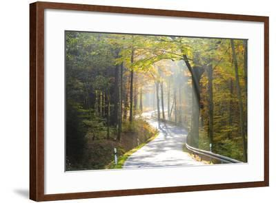 Road Through Autumn Woodland, Saxon Switzerland, Saxony, Germany-Peter Adams-Framed Photographic Print