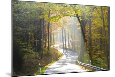 Road Through Autumn Woodland, Saxon Switzerland, Saxony, Germany-Peter Adams-Mounted Photographic Print