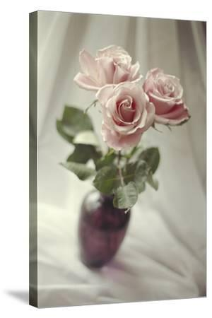 Pink Roses-Anna Miller-Stretched Canvas Print