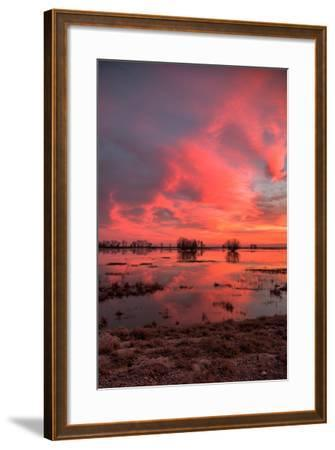 Fiery Marsh Sunset Sky--Framed Photographic Print