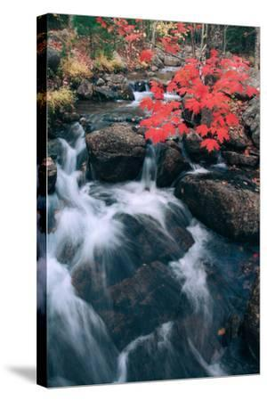 Jordan Stream in Autumn II, Maine Coast--Stretched Canvas Print