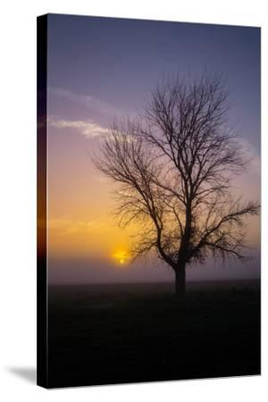 Misty Morning Sun and Tree Design II--Stretched Canvas Print
