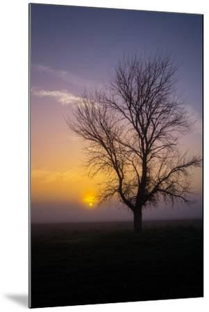 Misty Morning Sun and Tree Design II--Mounted Photographic Print