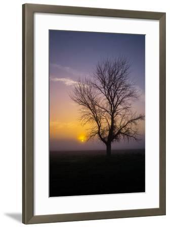 Misty Morning Sun and Tree Design II--Framed Photographic Print