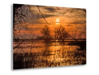 Marsh Sunset Through the Trees, Merced Wildlife-Vincent James-Metal Print