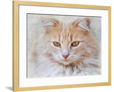 Orange Tabby Cat Portrait-Jai Johnson-Framed Giclee Print
