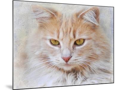 Orange Tabby Cat Portrait-Jai Johnson-Mounted Giclee Print