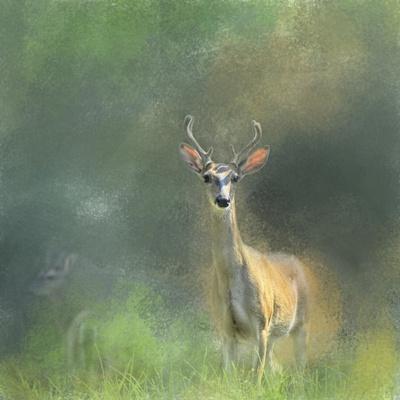 Leader of the Herd White Tailed Buck-Jai Johnson-Framed Giclee Print