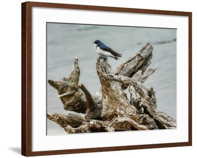 Driftwood Song-Jai Johnson-Framed Giclee Print